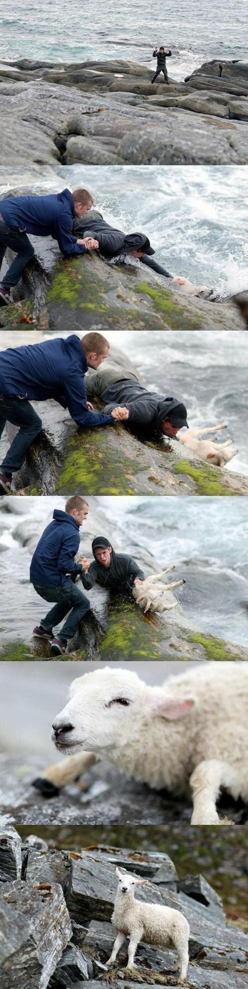 Dos Noruegos Salvando a una Oveja