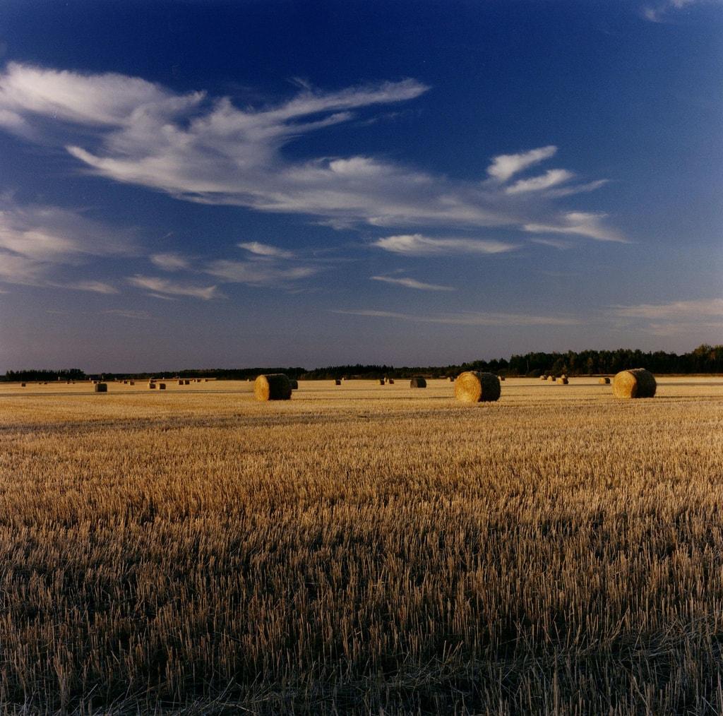Grasslands Alberta