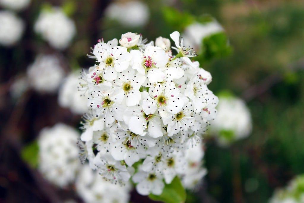 9 Consejos Para Captar Unas Flores Impresionantes   Blog del Fotógrafo
