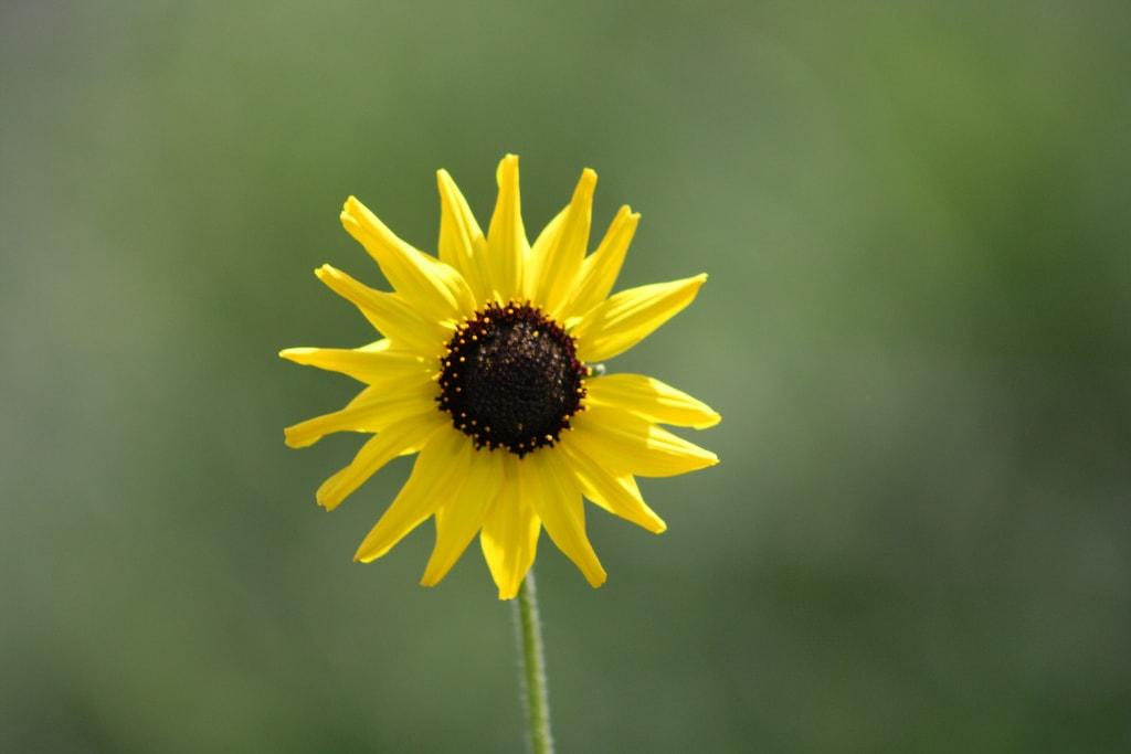 9 Consejos Para Captar Unas Flores Impresionantes