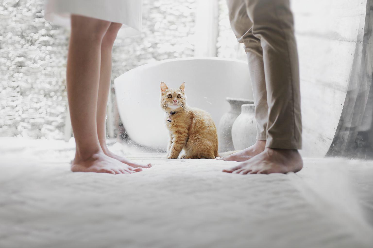 Gato observando a una pareja a la que solo se ven los pies