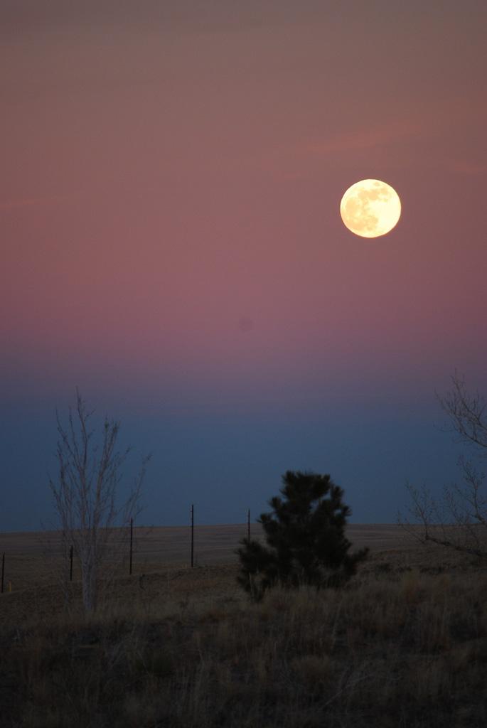 árboles y luna