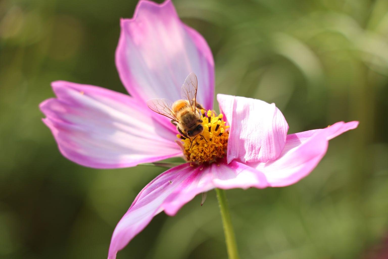 Foto ejemplo hecha con la Canon 70D-3