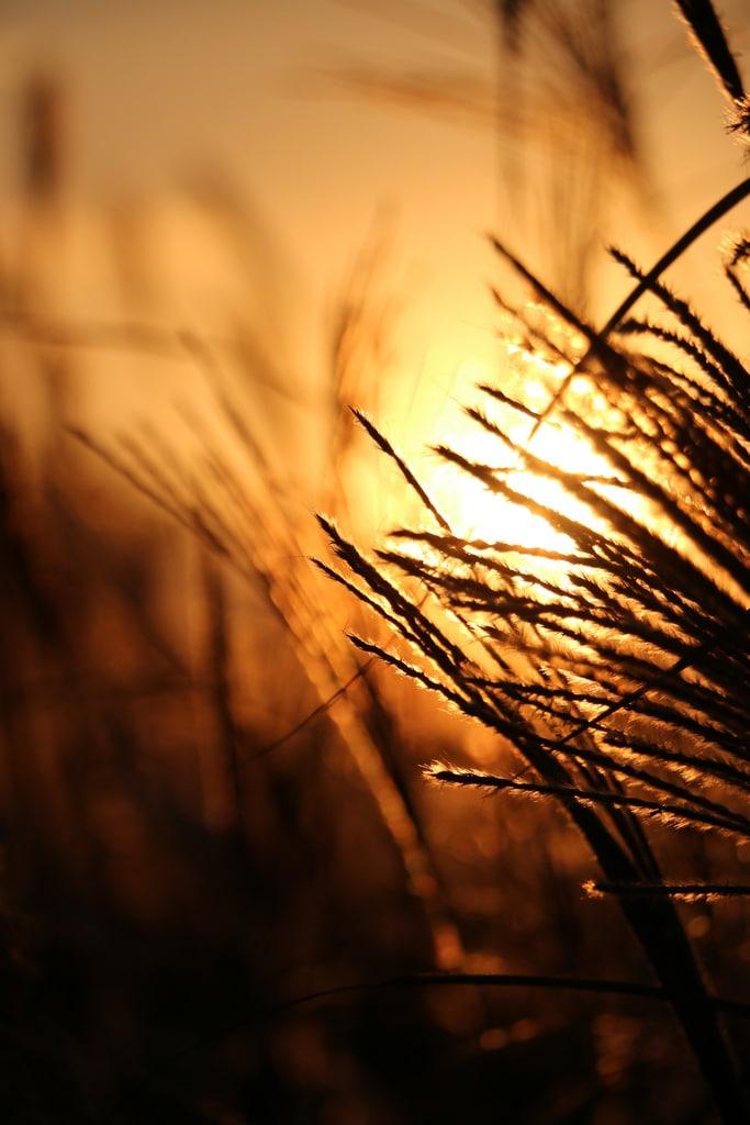 Foto ejemplo hecha con la Canon 70D-7
