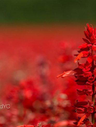 Flores con una profundidad de campo realmente pequeña