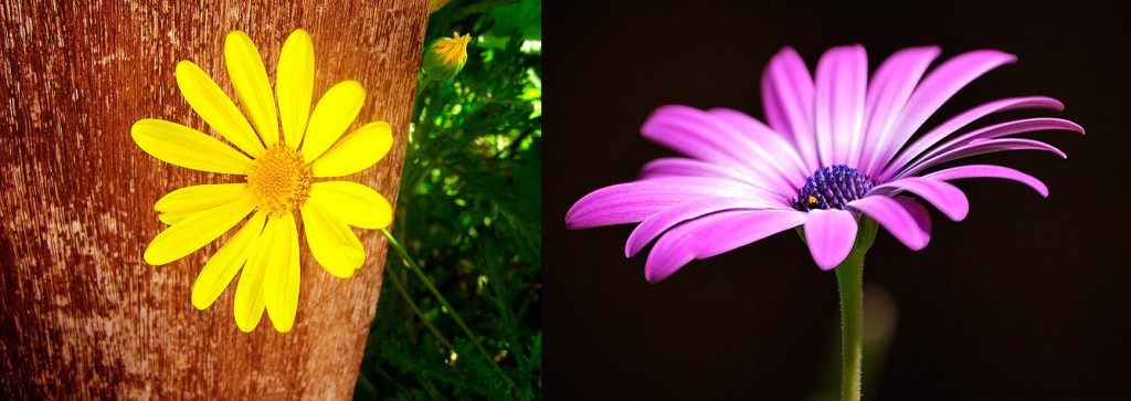 Comparativa de flor con fondo limpio y con distracciones