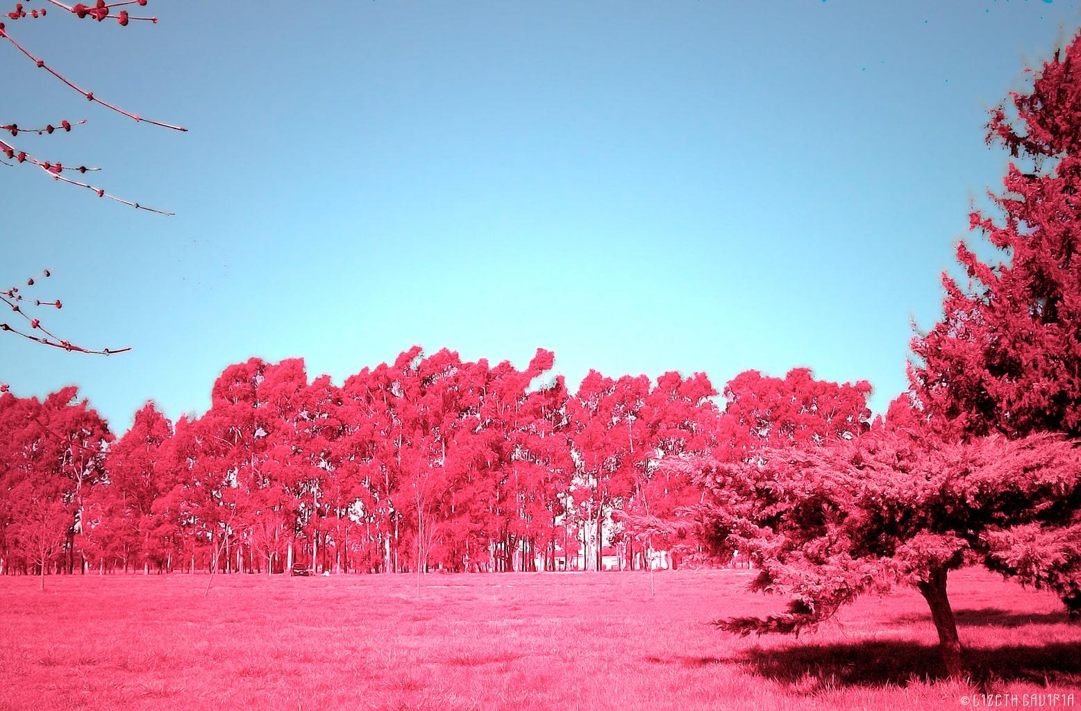 """Primavera Rosa"" de Lizeth Gaviria"