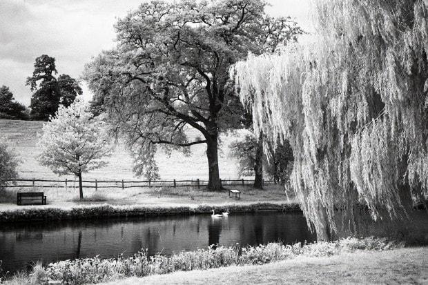 Fotografía infrarroja en blanco y negro