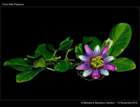 palnta con flor