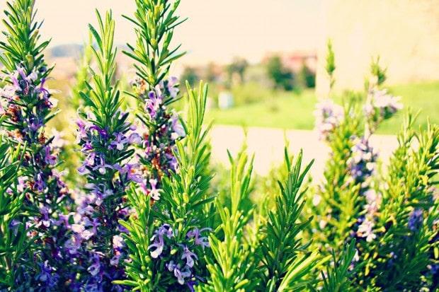 fotografía plantas enmarcada