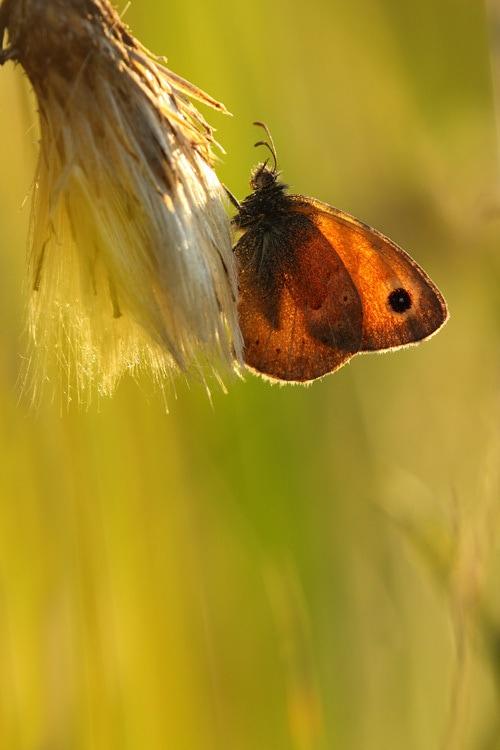 Alas de mariposa translúcidas