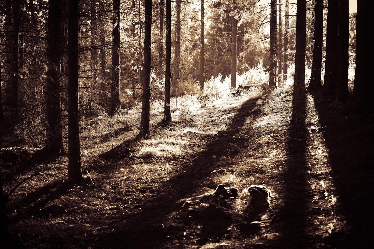 Contraluz en un bosque.