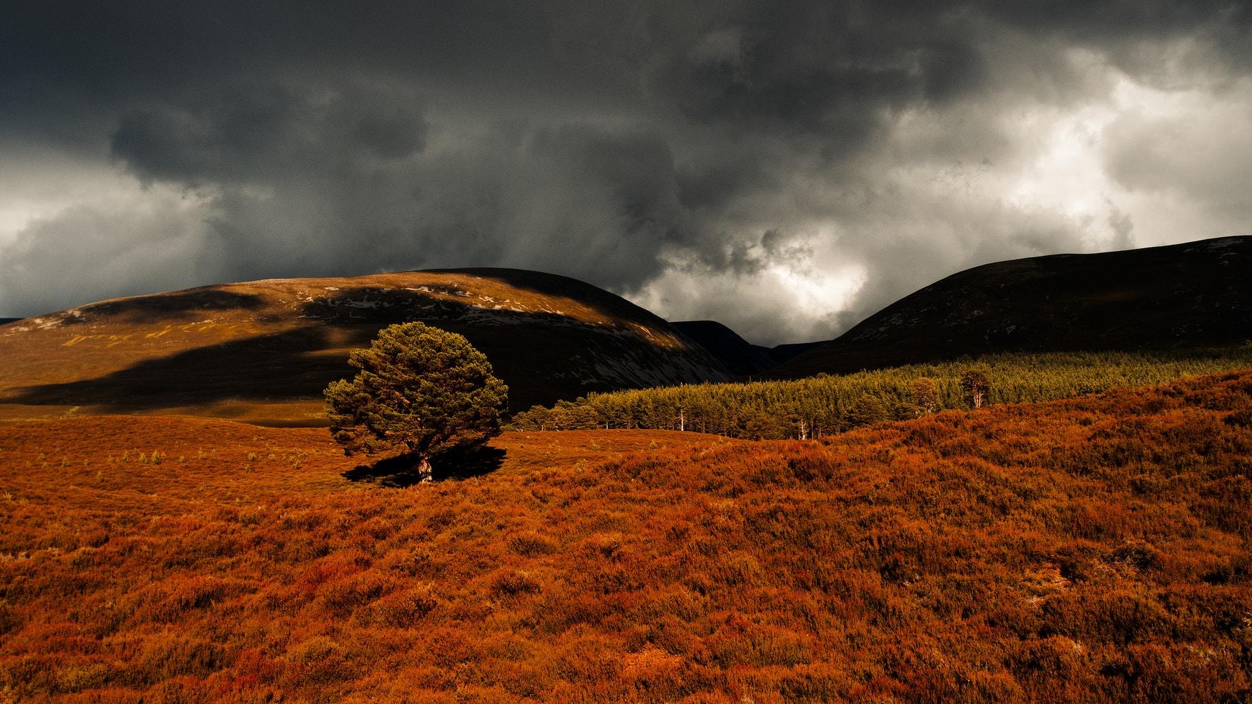 El contraste de la tormenta