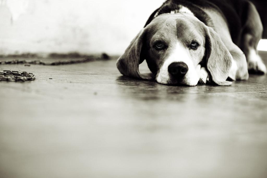 El ángulo desde el que disparó esta foto permite crear mayor sensación de proximidad e intimidad con la mascota