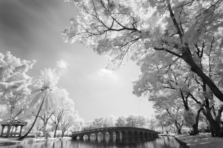 Fotografía infrarroja