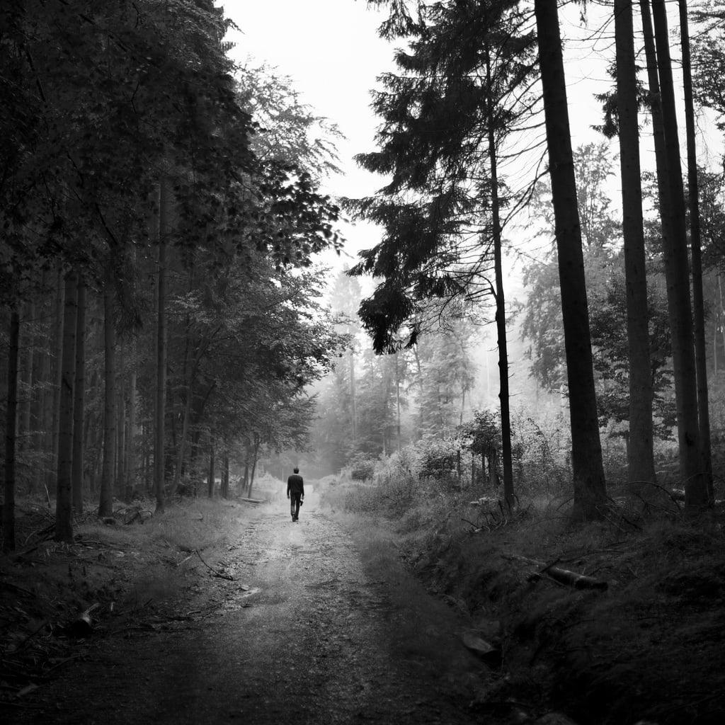 Consejos para fotografiar la vida en el bosque blog del fot grafo - Fotos en blanco ...