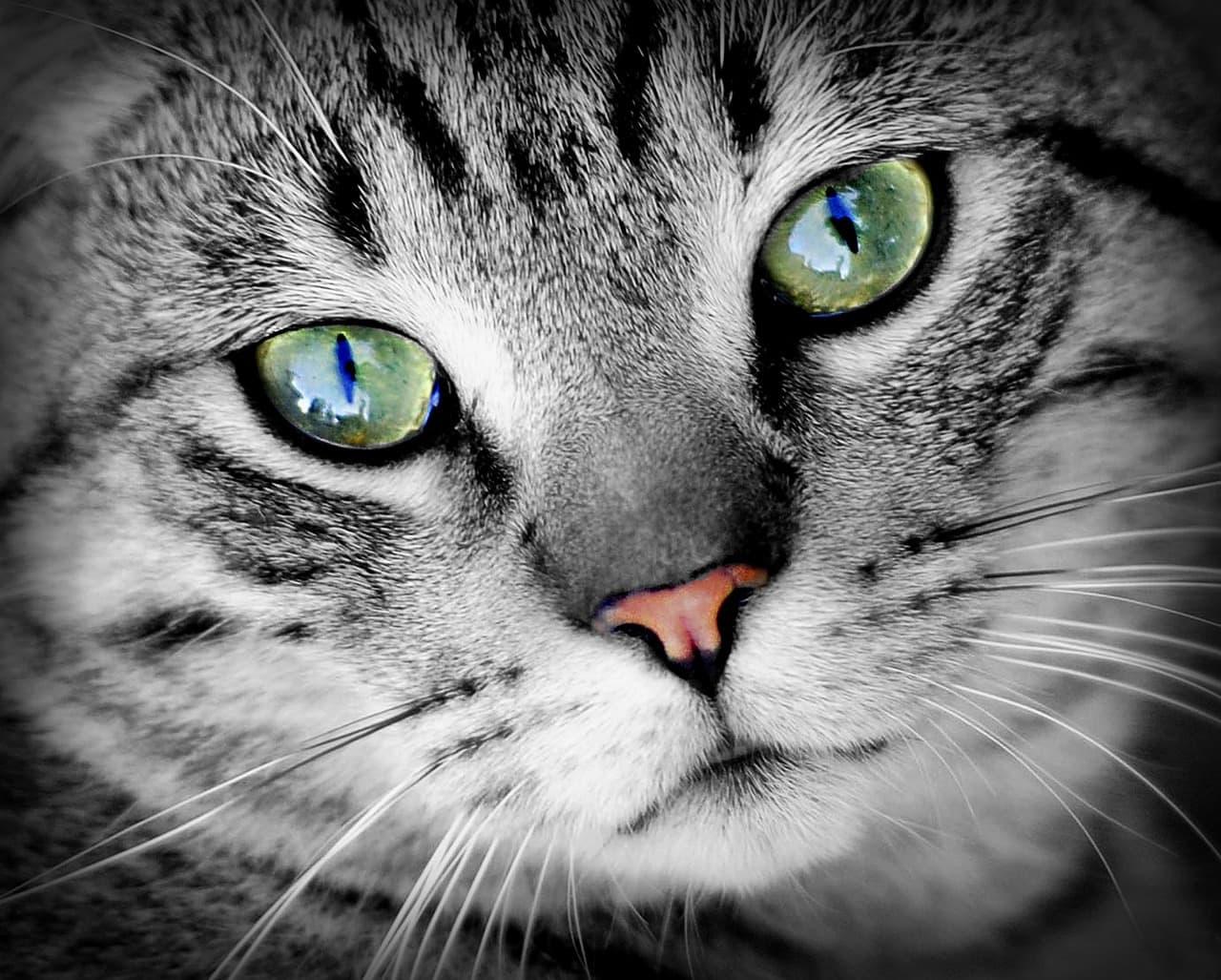 cat-686803_1280