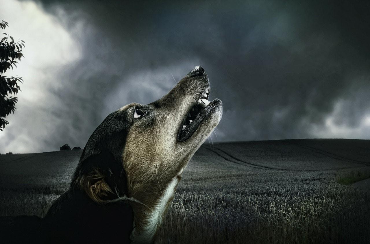dog-183288_1280