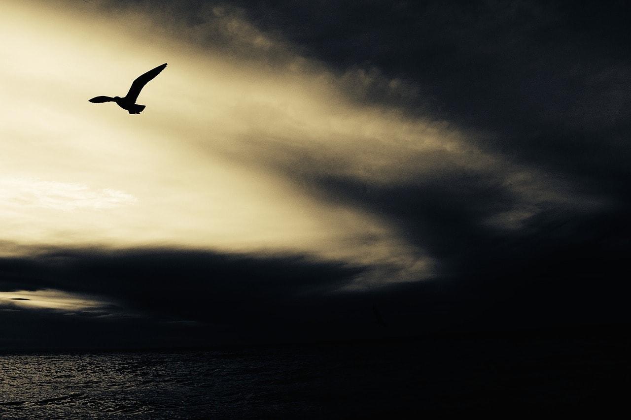 La tormenta de los pájaros