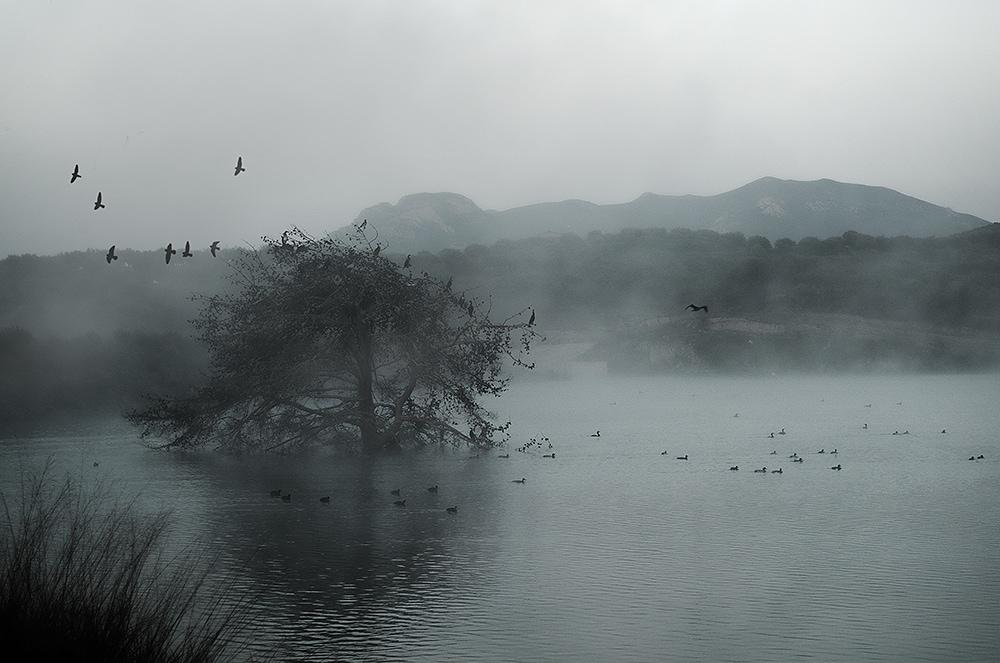 Mágica niebla