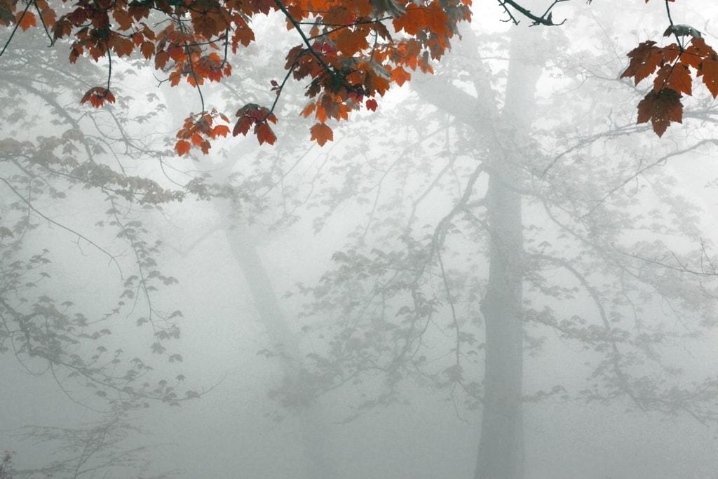 Foto otoñal hecha con niebla