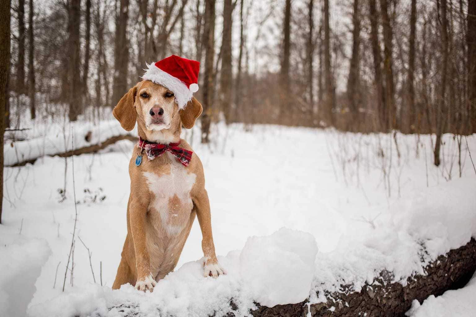 fotografía perro en la nieve con gorro de navidad