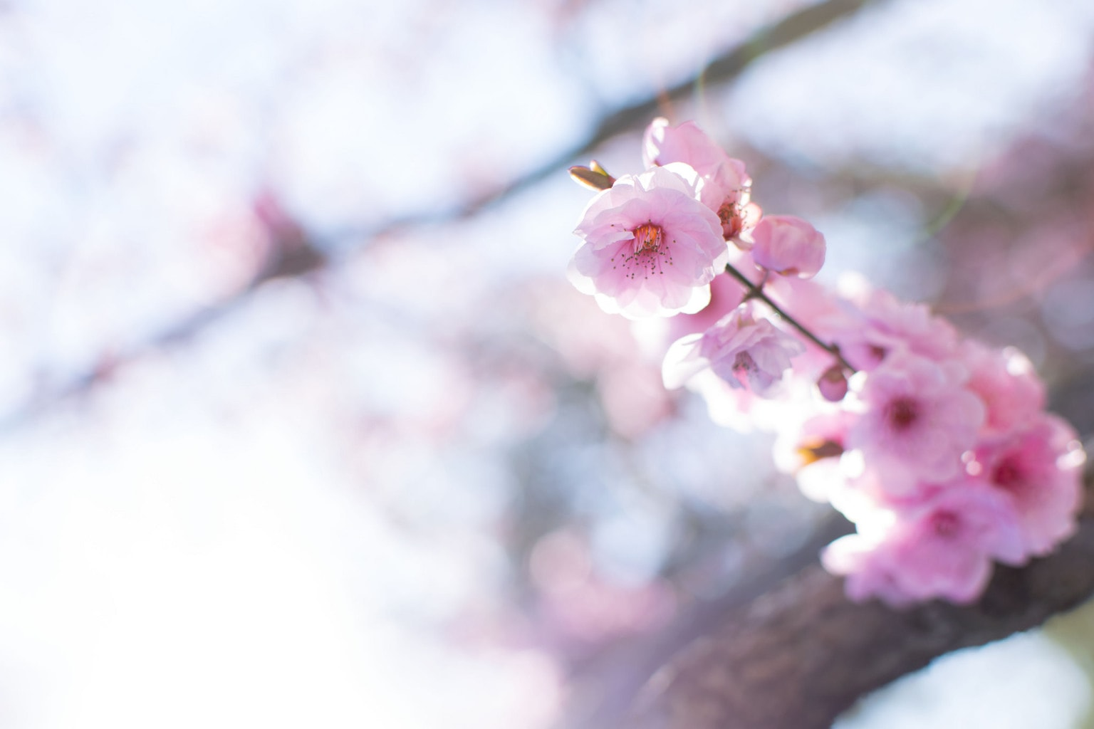 Ejemplo de foto tomada con la Nikon D3300