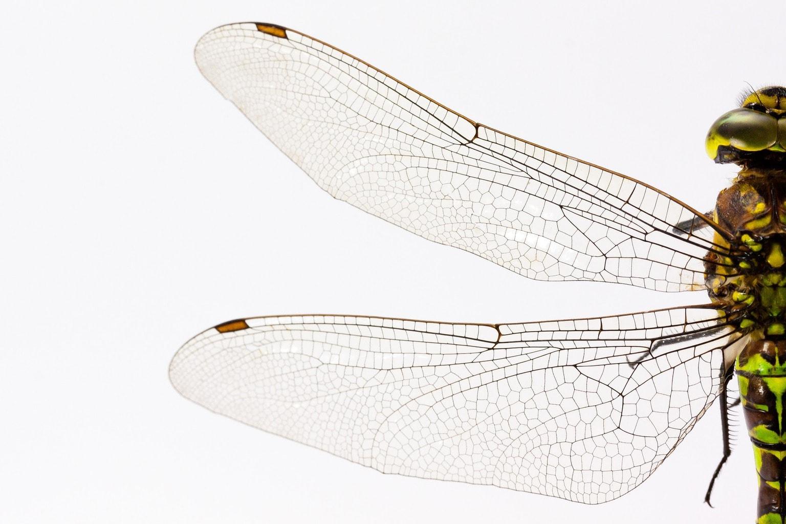 dragonfly-867888_1920