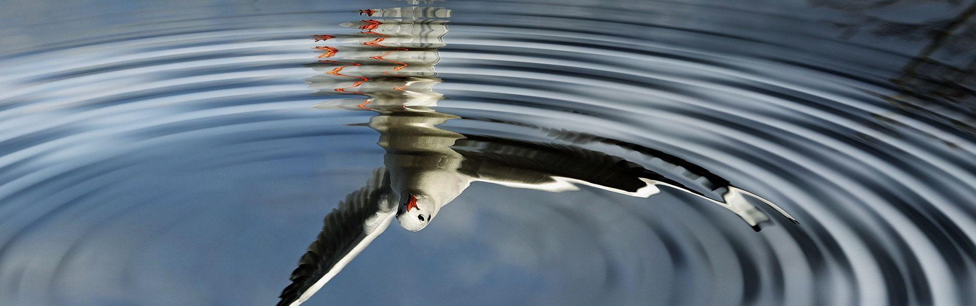 birds-1105286_1920