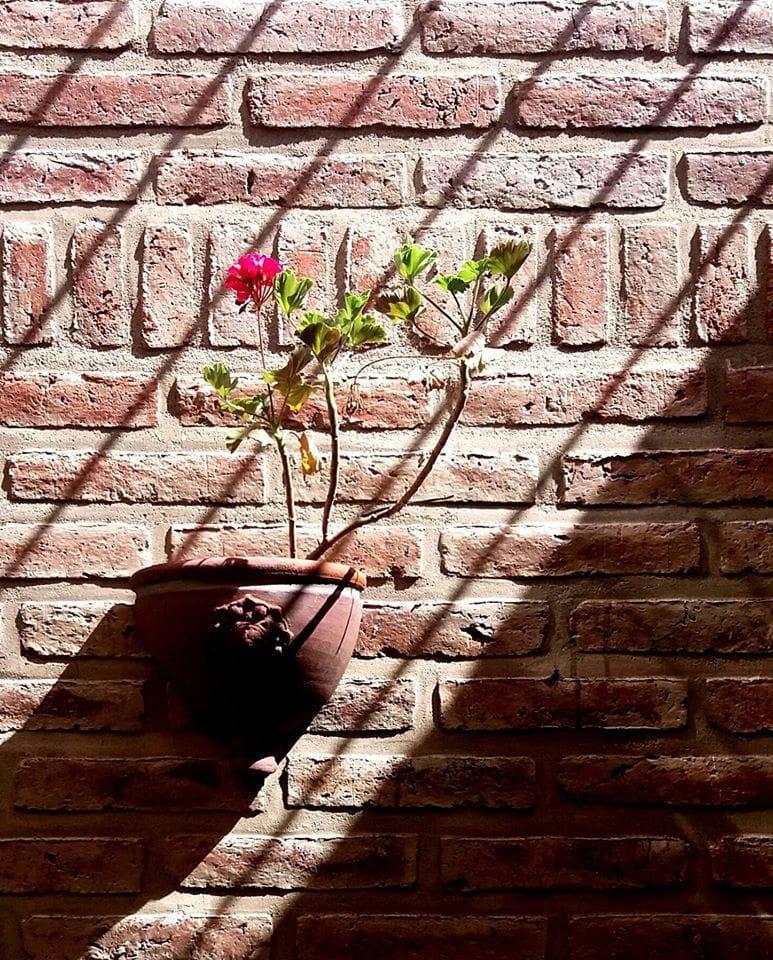 Francisco Ponticelli_Cárcel floral