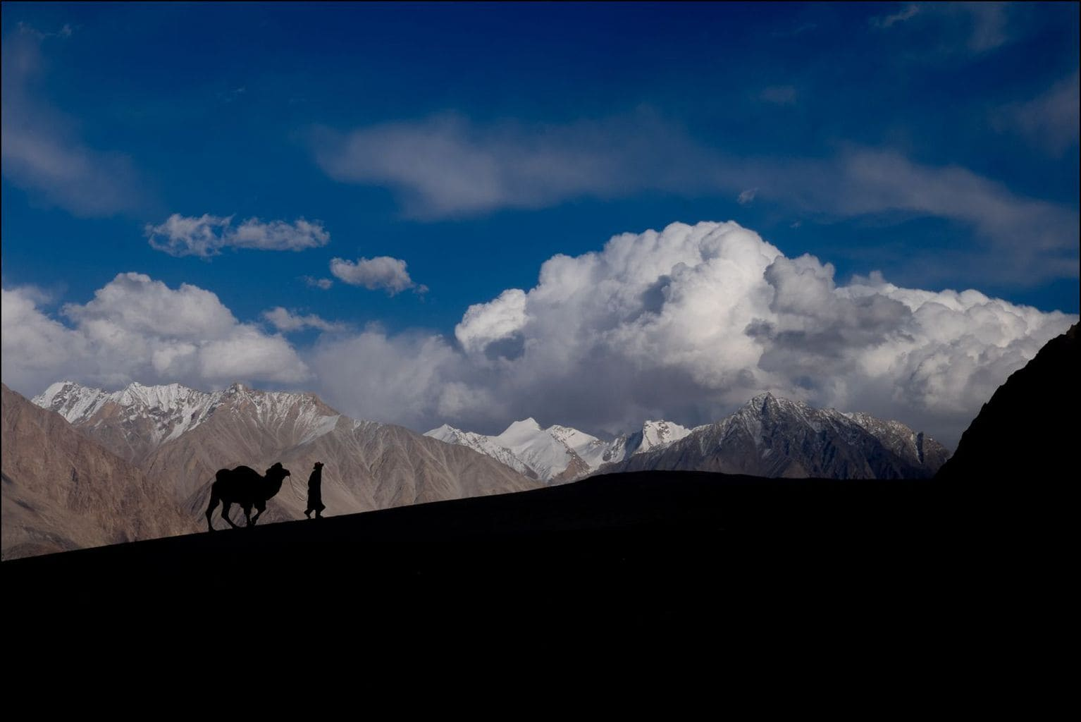 Two Humped Camel - Hunder, Ladakh, India