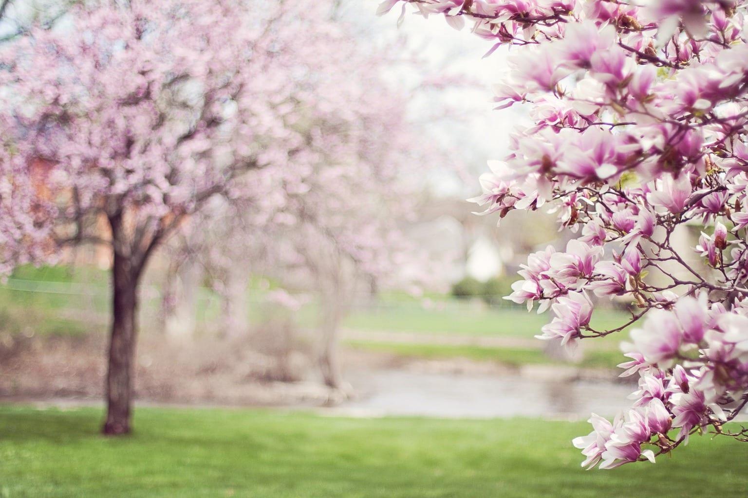 La belleza del árbol en flor