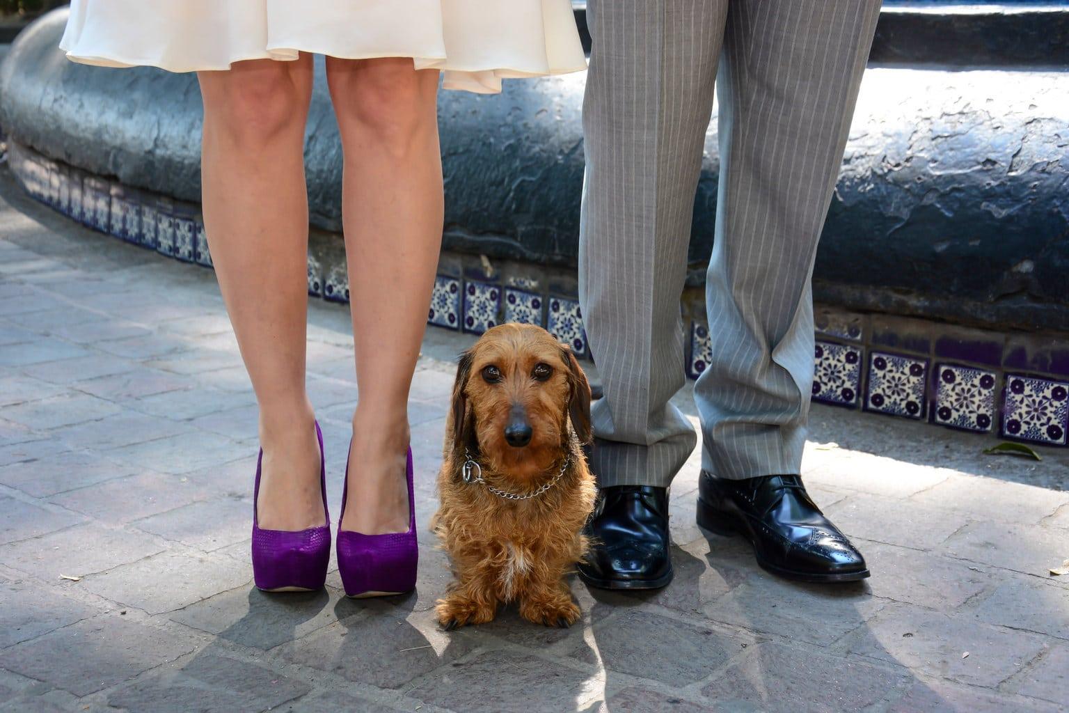 Mascotas, invitados de honor