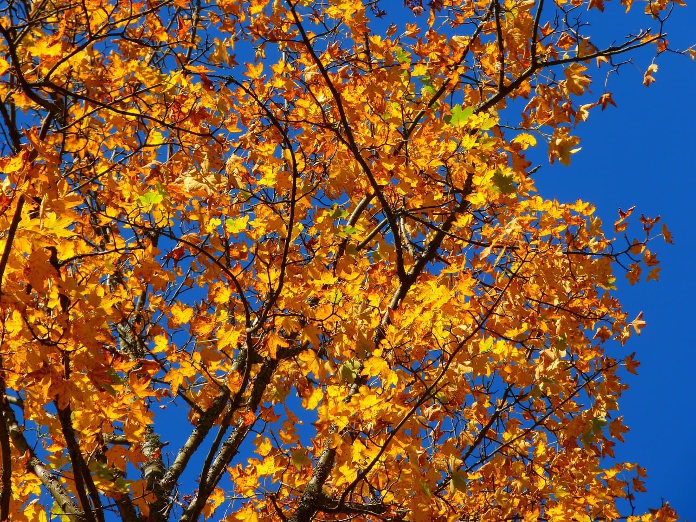 autumn-63271_1920
