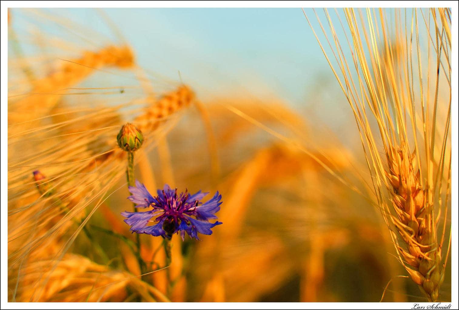 Image prise avec un Nikkor AF-S DX 35 mm f / 1,8