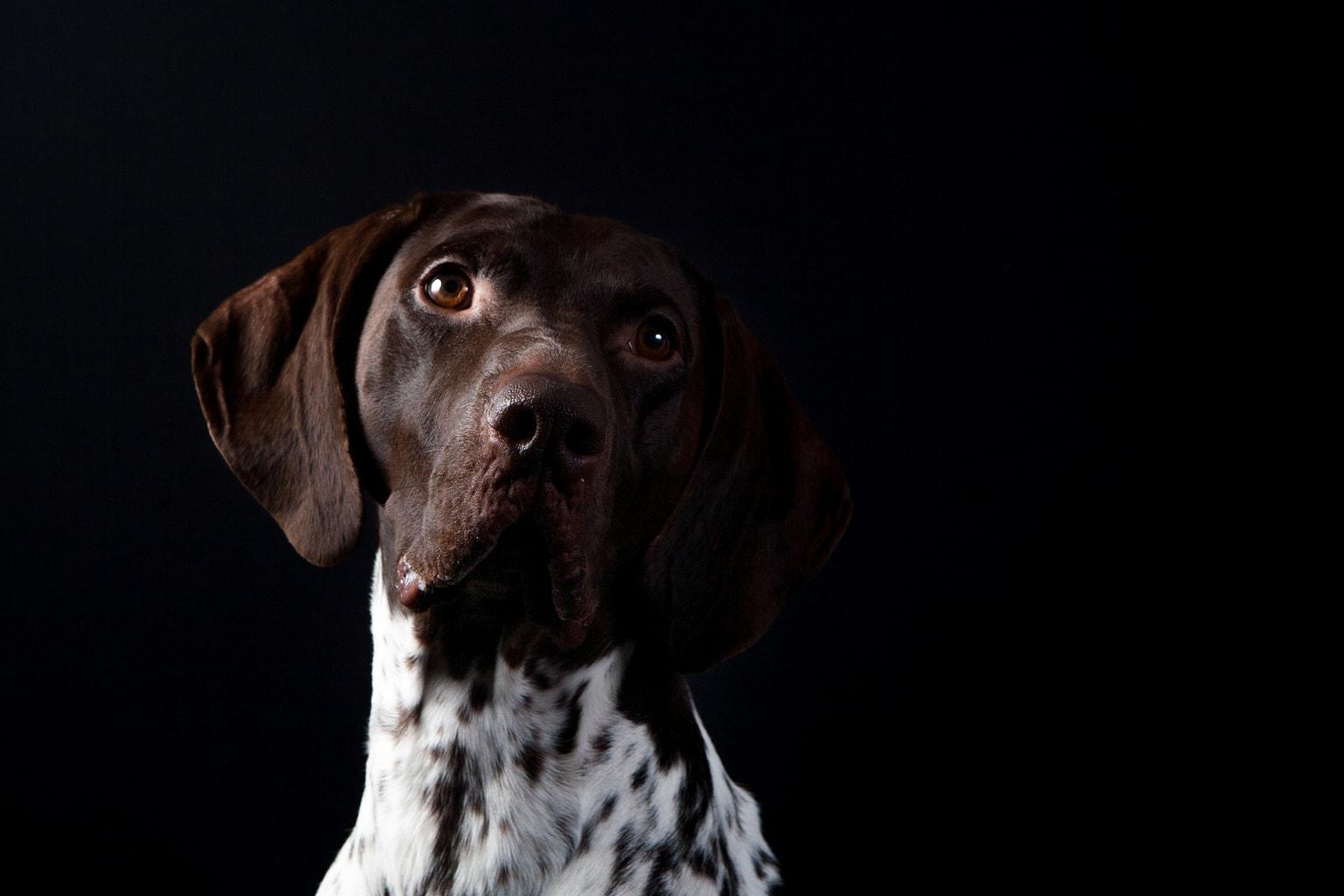 retrato perro con fondo oscuro