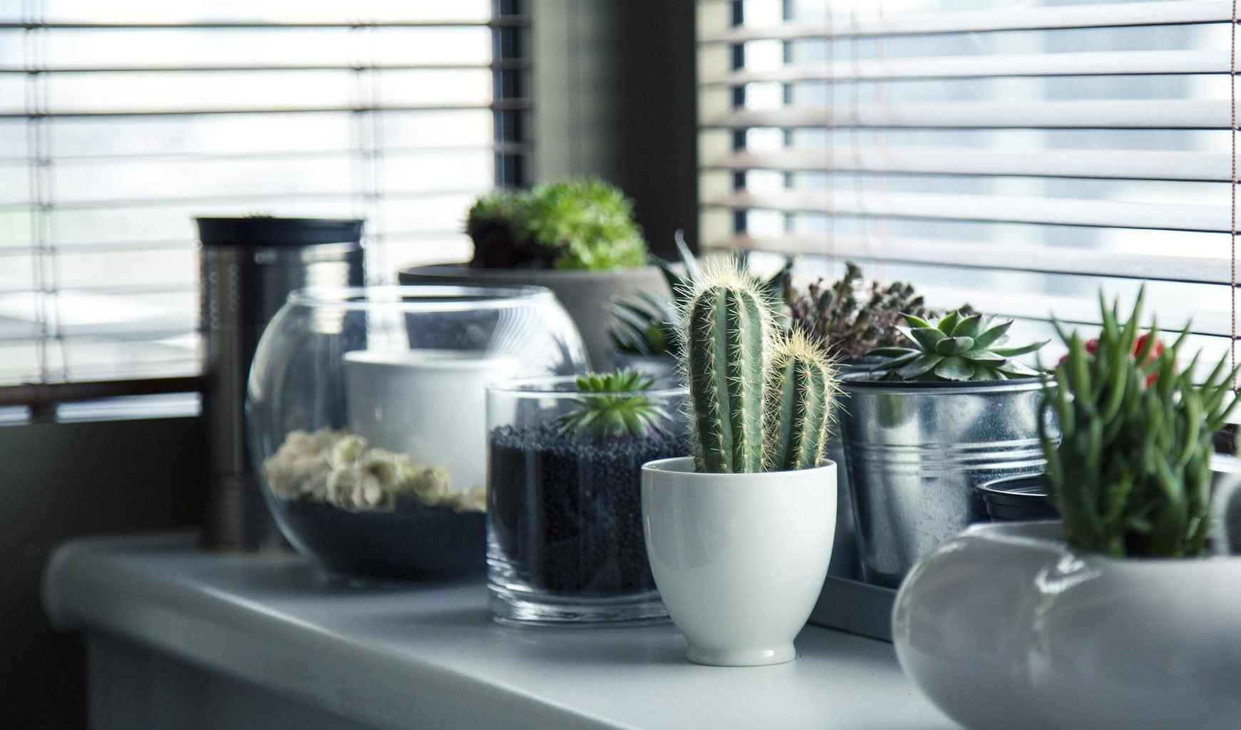 fotografía de macetas con plantas