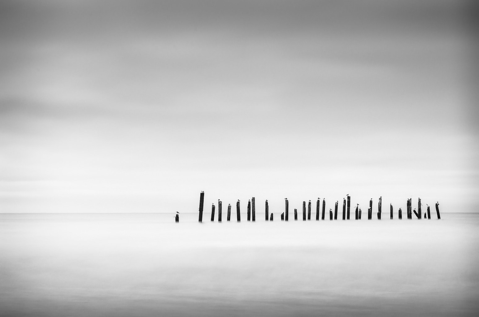 paisaje blanco y negro espigón y gaviotas