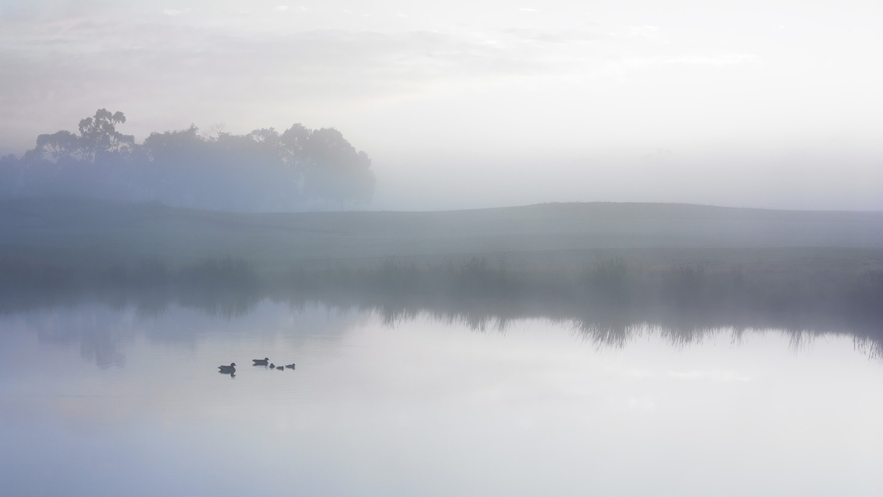 Onírica niebla
