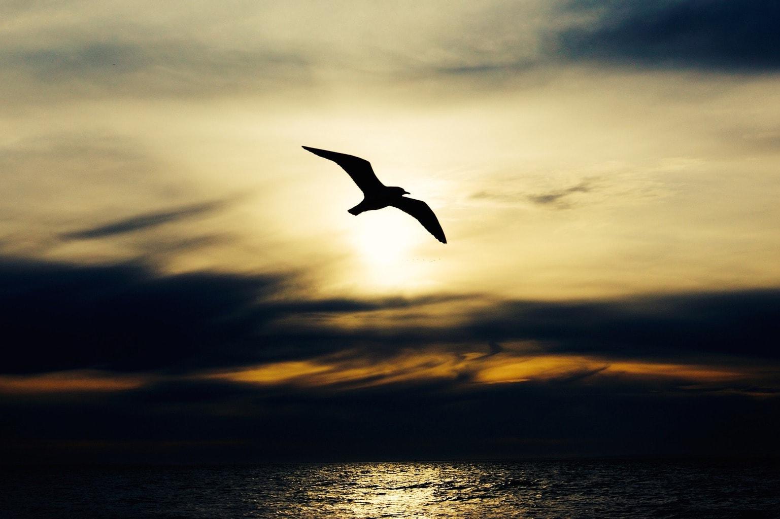 una gabiota volando