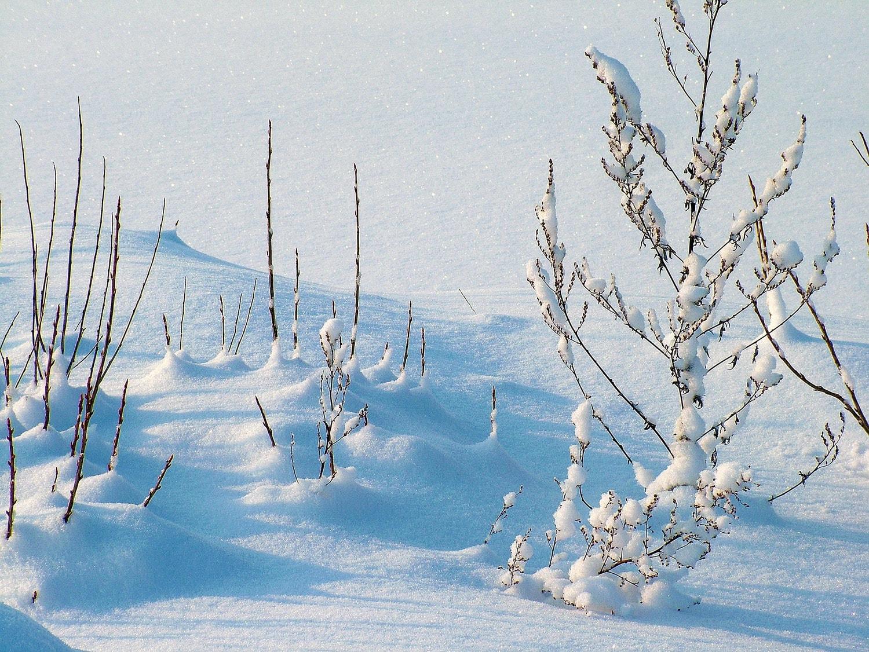 Los encantos de la nieve