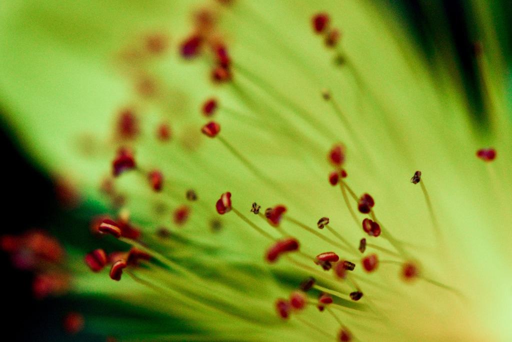 fotografía macro de una flor