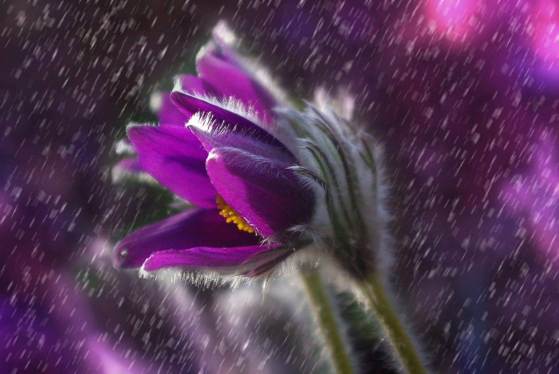 fotografía macro de una flor morada
