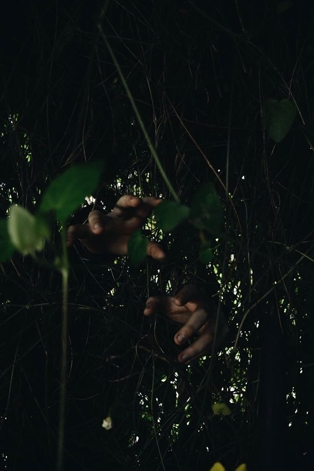 fotografía de manos y plantas