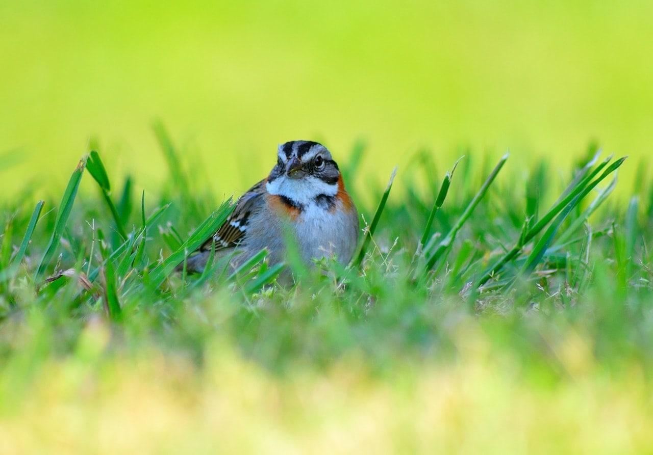 fotografía macro de un pájaro