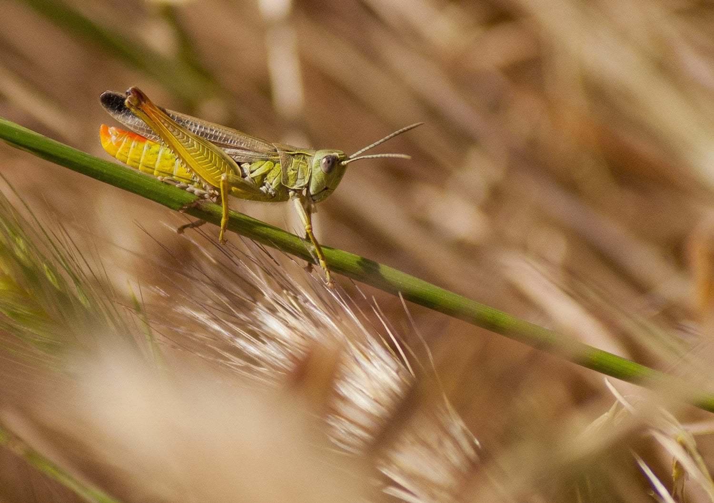 Fotografía macro de insecto