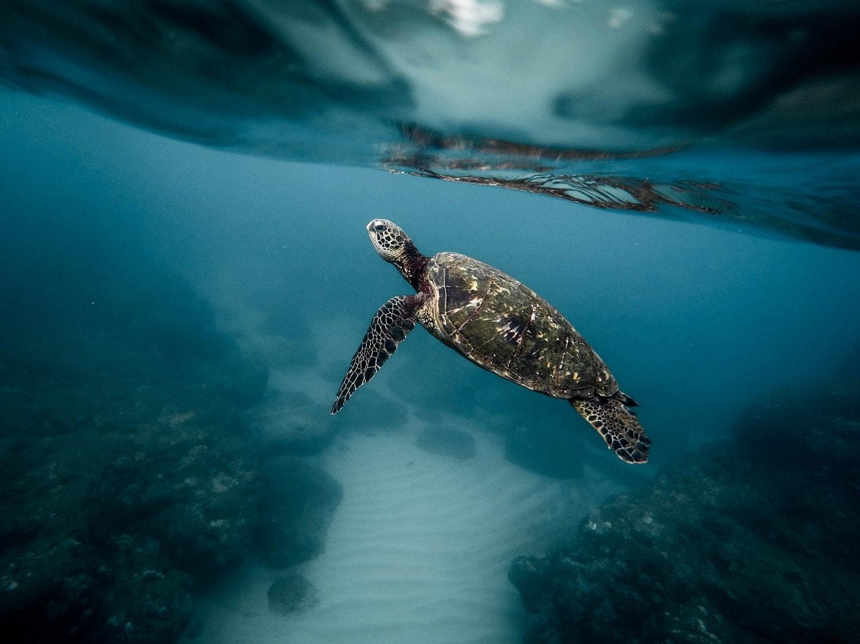 Fotografía submarina de una turtuga