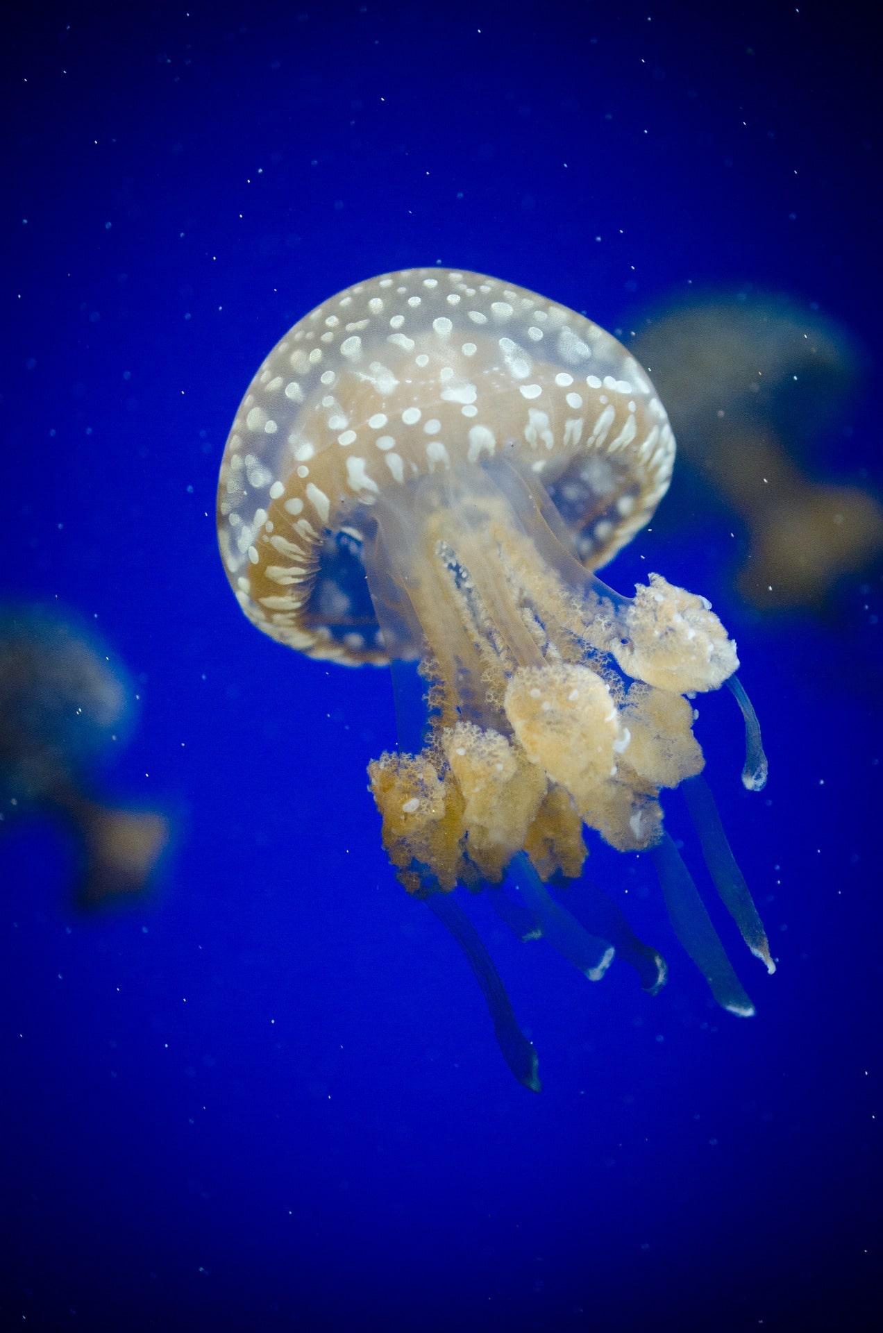 Fotografía submarina de una medusa