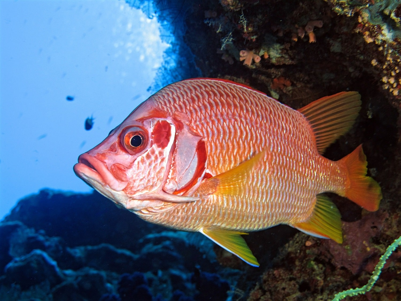 Fotografía submarina de un pez