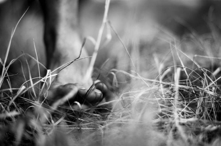 fotografía pie descalzo en el campo